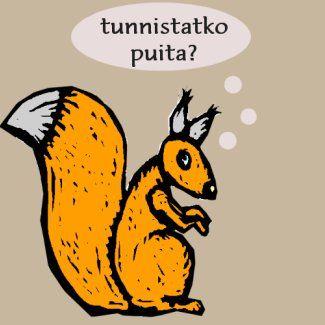 Tunnistatko suomalaisia puita?