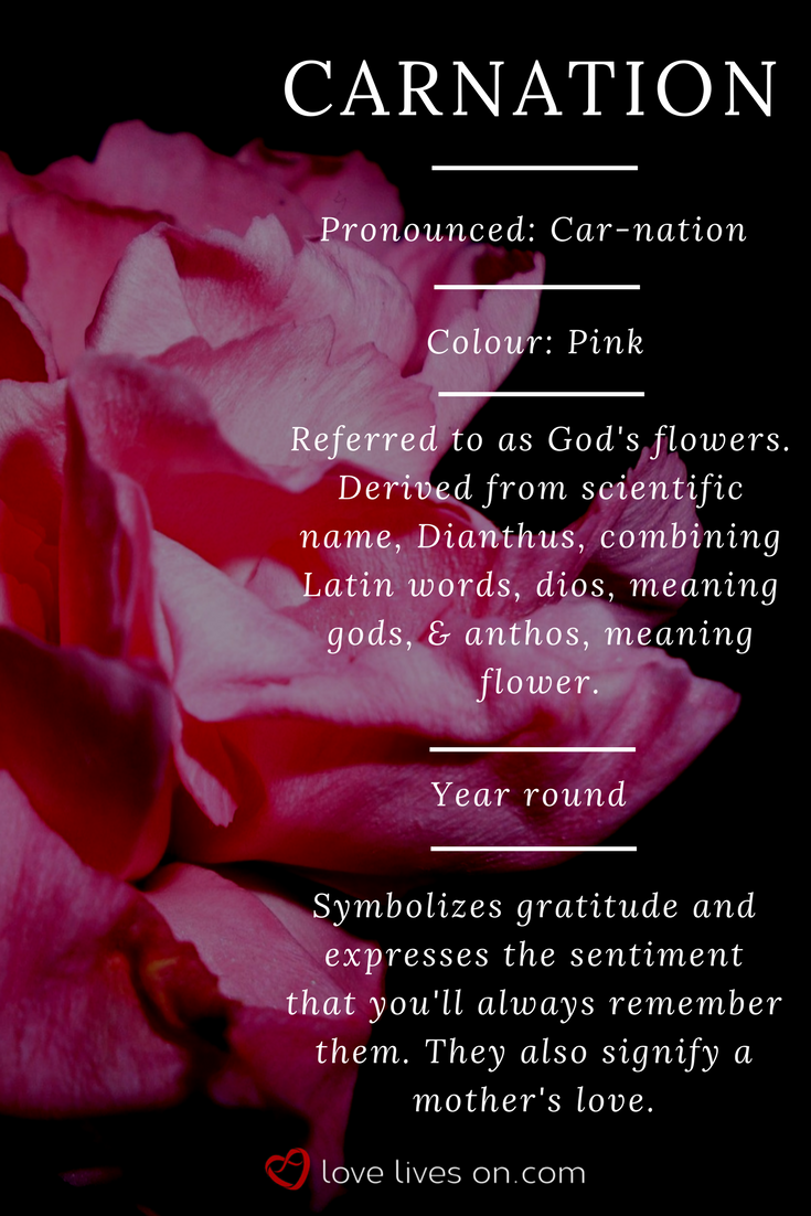 10 best funeral flowers pinterest funeral flower arrangements carnation meaning pink carnation meaning click to learn 10 more different types of izmirmasajfo