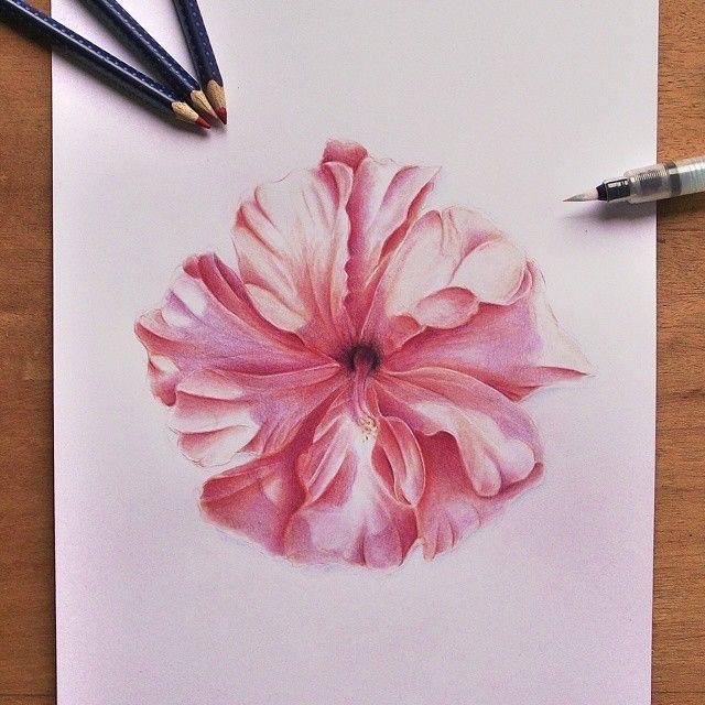 Dessin D Un Hibiscus Realise A L Aquarelle Et Detaille Par La