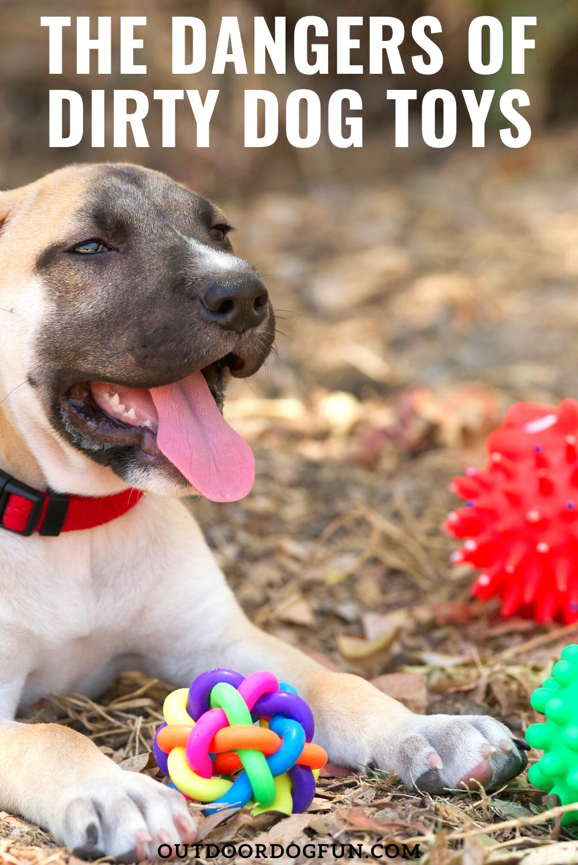 Pin on Outdoor Dog Fun