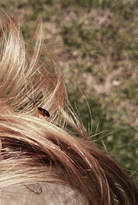 bichos en el pelo