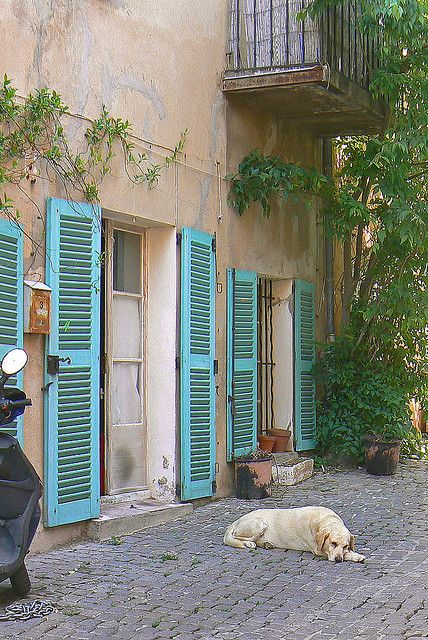 Chien Tropezien Volets Bleus Porte Fenetre Terrasse Jardin