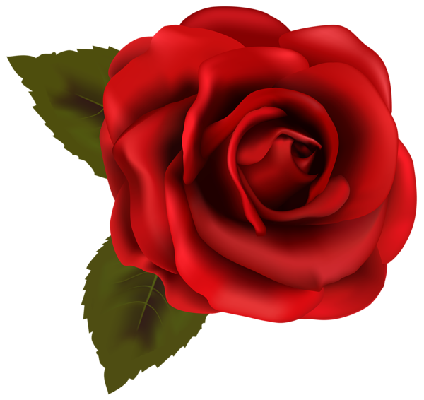 beautiful red rose transparent png clip art image things to wear rh pinterest co uk rose pictures clipart single rose images clipart