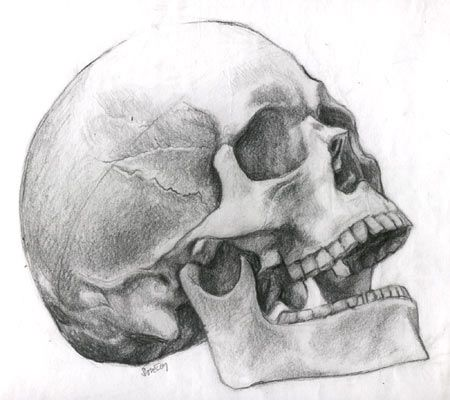 Big Skull Reference Images Pack For Airbrush Human Skull Drawing Skull Drawing Skull Sketch