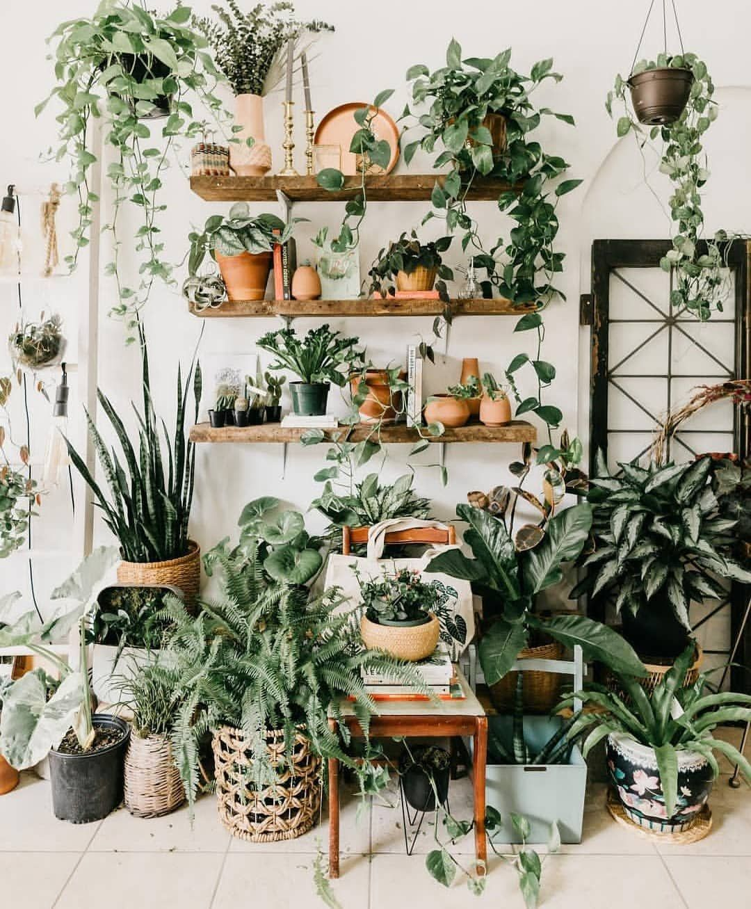 "Urban Jungle Bloggers™ on Instagram ""PlantShelfie"