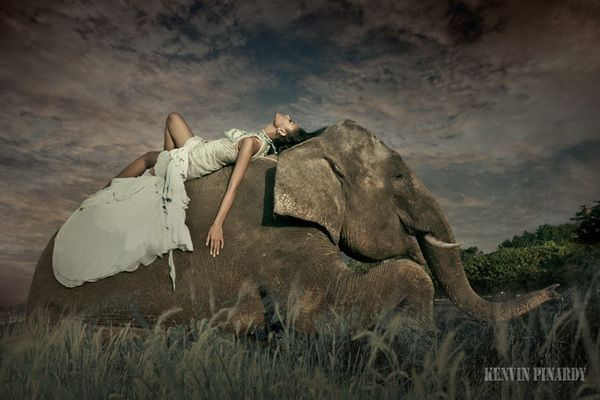 Fashion and elephants.