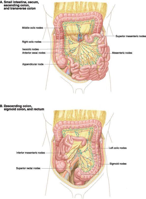 Ovid: Lippincott Williams & Wilkins Atlas of Anatomy   anatomia ...