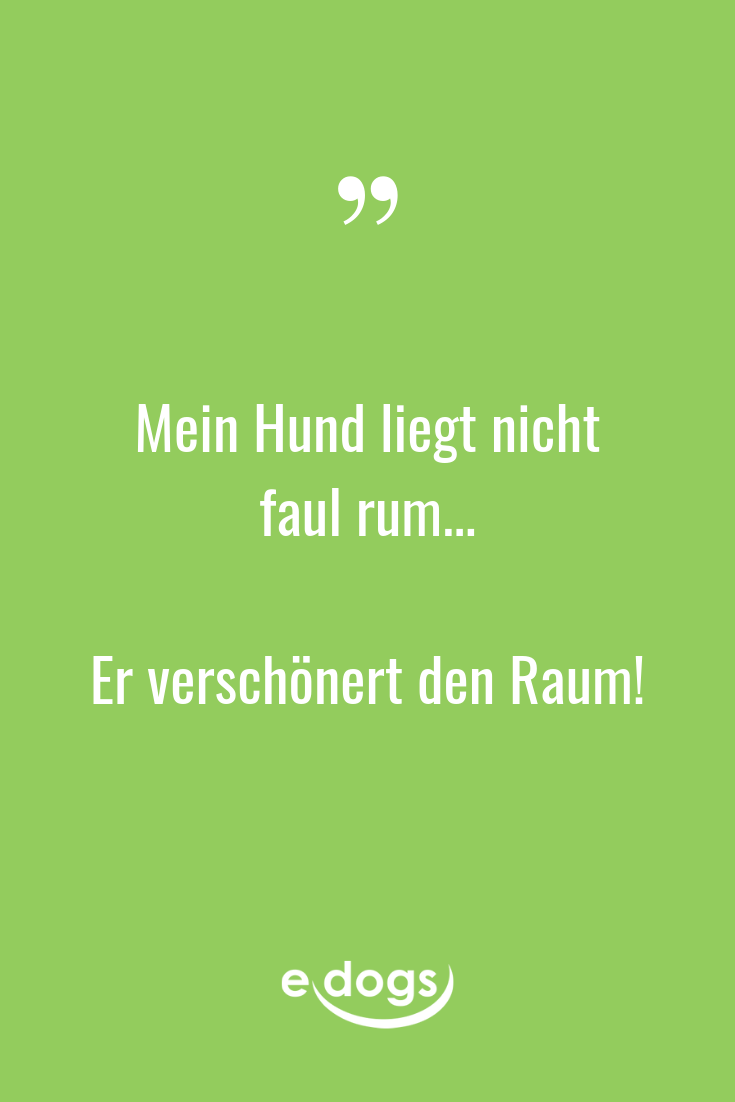 Lustige Hundesprüche, inspirierende Zitate, DIY und mehr rund um den Hund findest du bei edogs.de! - Spruch des Tages - Hundeliebe - Hundemensch