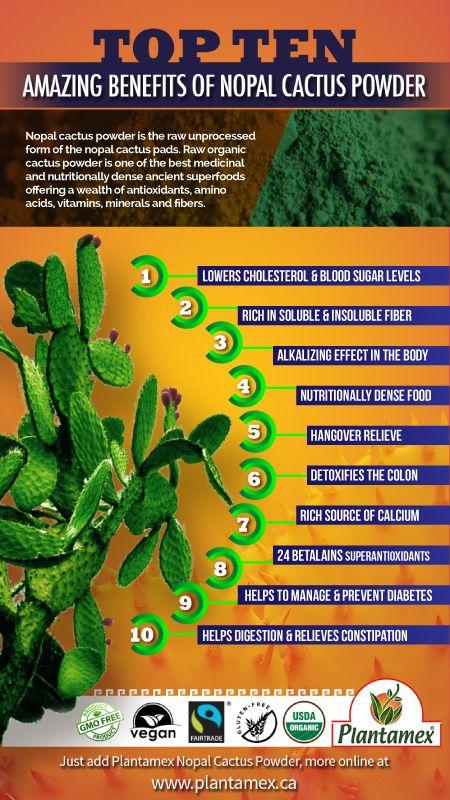 Pin by Plantamex on Organic Nopal Cactus Powder | Cactus, Cactus
