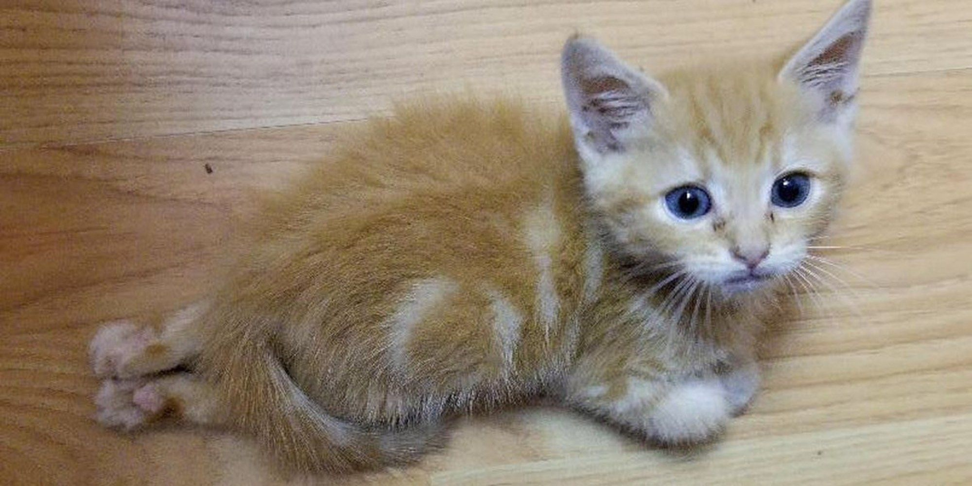 A Tiny Ginger Kitten Had A Rough Start To Life Despite Being Partially Paralyzed In His Back Legs Nothing Can Sl Kitten Cute Animal Pictures Cats And Kittens