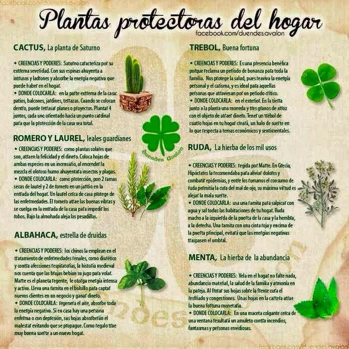 Plantas que protegen tu hogar | Pinterest | Plantas, Hogar y Jardinería