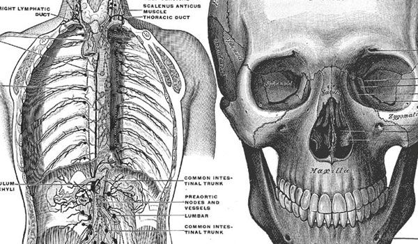 Greys Anatomy Book Pictures Google Search Human Body