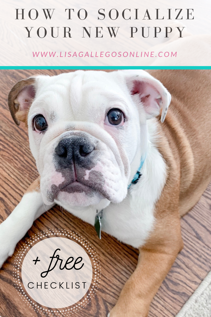 Want To Socialize Your New Bulldog Puppy Click Here To Learn More Plus Download A Free Checklist Puppy Training Puppy Socialization Dog Behavior Training
