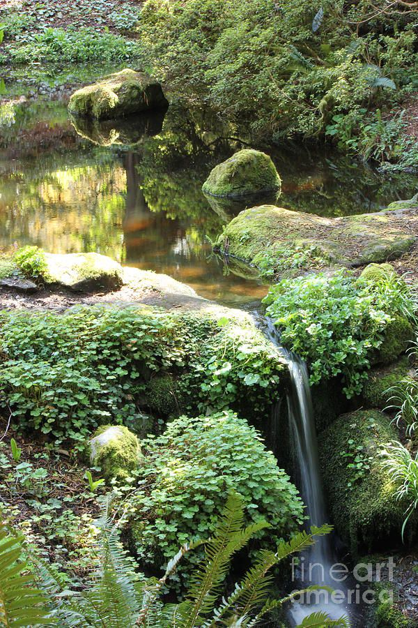 A small pond with a waterfall Water Gardens Pinterest - fuentes de cascada