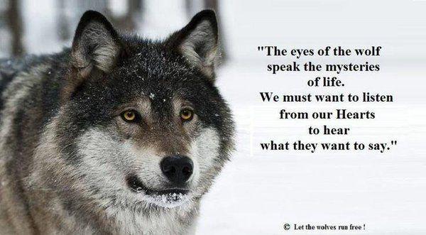 Wolfs free porn