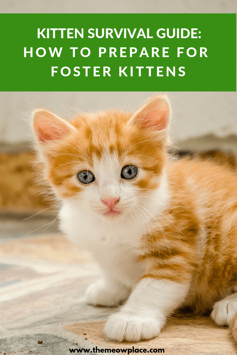 Kitten Survival Guide How To Prepare Your Home For Foster Kittens Foster Kittens Cat Care Kitten Care