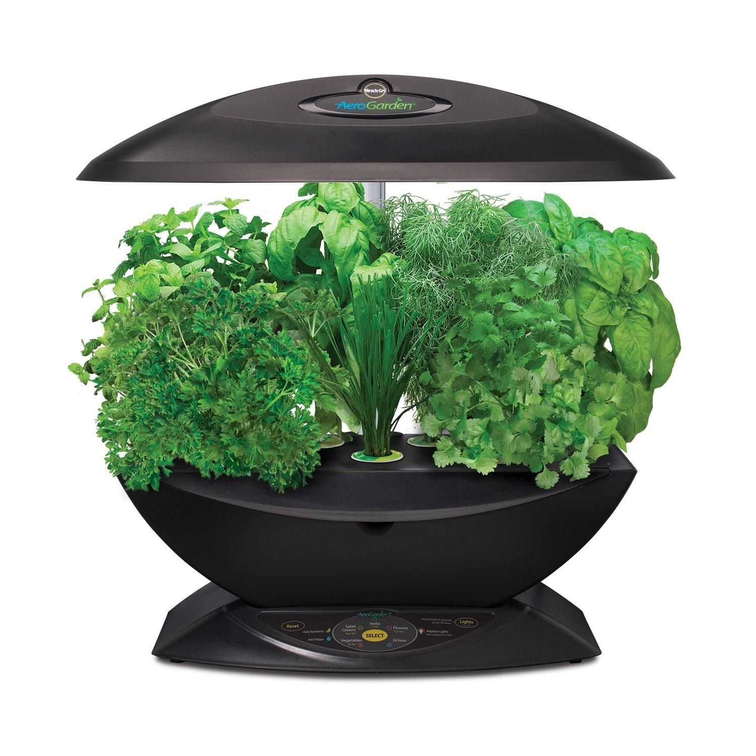Choices For Growing Vegetables Indoors Herb Seeds 640 x 480