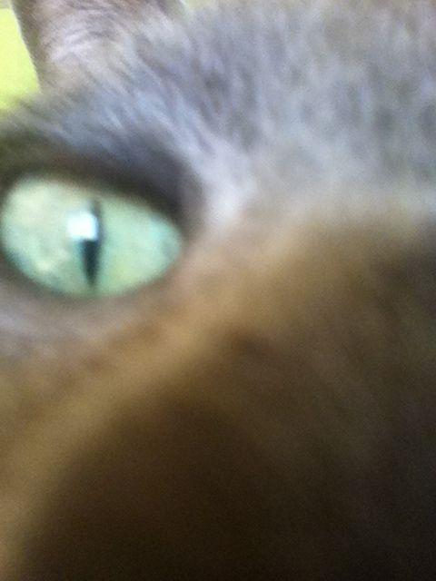 Mačička oucs