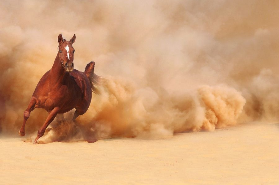 Horse running in a full speed!!! | Horses | Horses, Beautiful