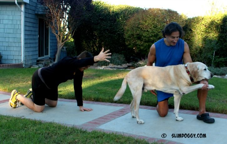 Core Strength Training For Dogs The Snoopy Core Strength