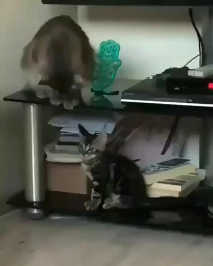 """ᵂʰᵒᵒᵖˢ"" - kitty"