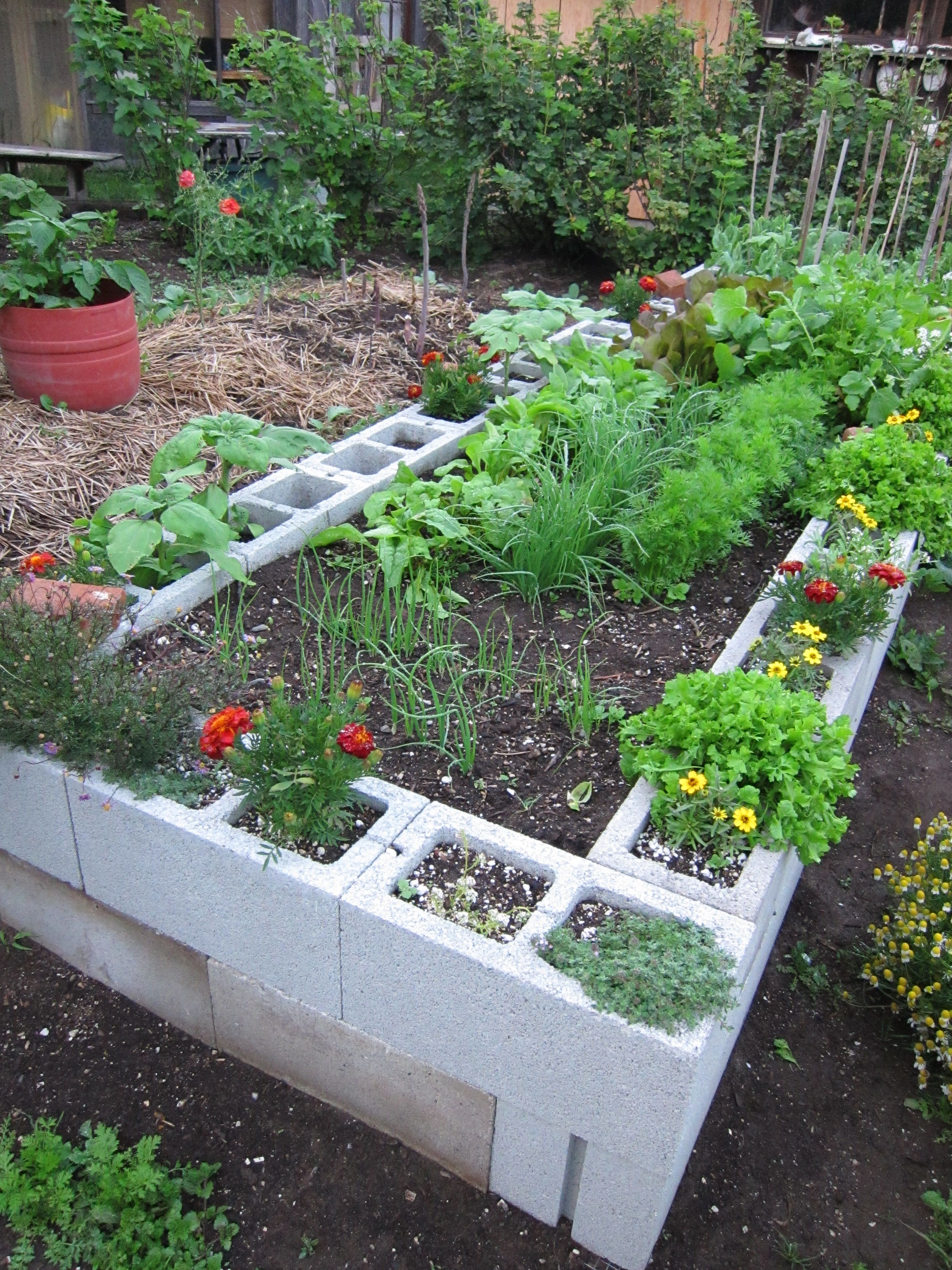 The HalfAcre Homestead Cinder block garden, Garden