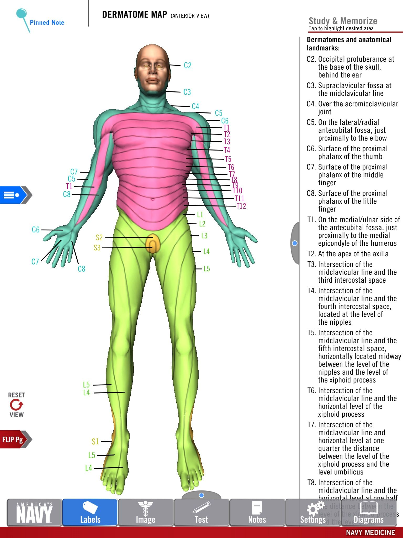 Diagram of the Dermatome Map from the free Anatomy Study Guide app ...