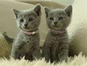 do cats like