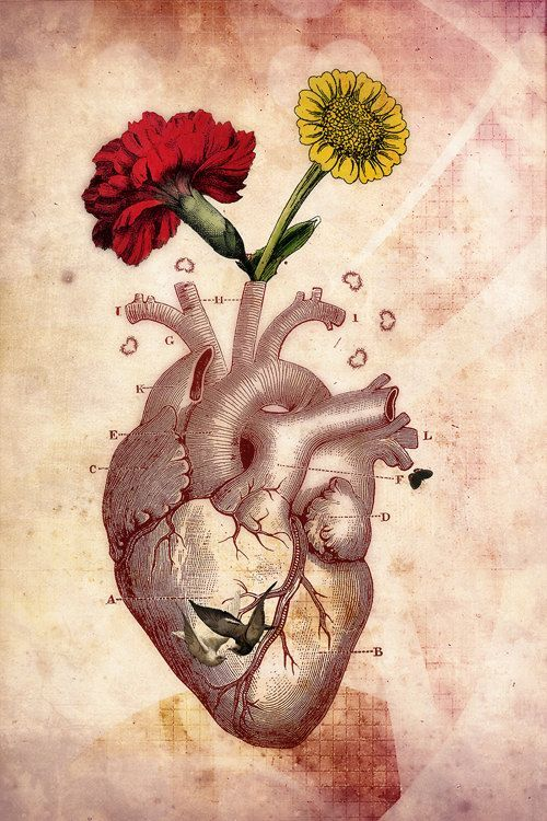 Anatomical Heart Art | @rt$Y** | Pinterest | Anatomical ...