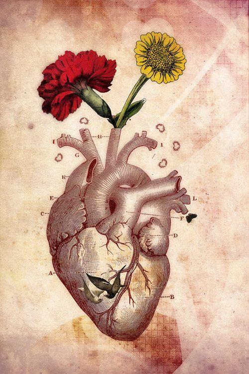 Anatomical Heart Art | @rt$Y** | Pinterest | Anatomical ...