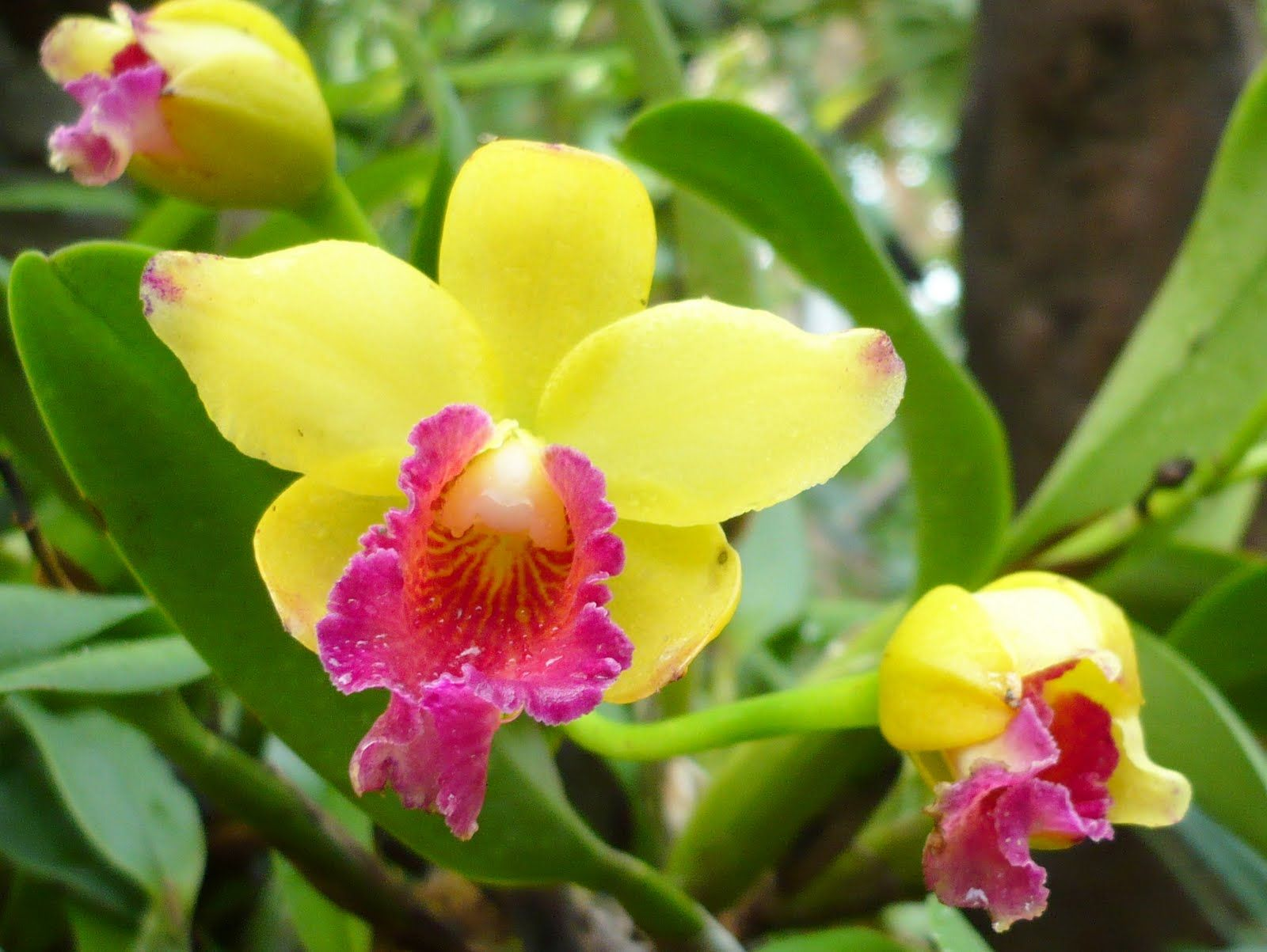 Flower picture orchid flower 8 scrapbook ideas pinterest the wallpapers section of the open walls here beautiful exotic flower wallpapers izmirmasajfo