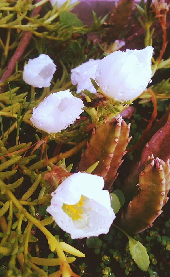 Fotos de plantas...