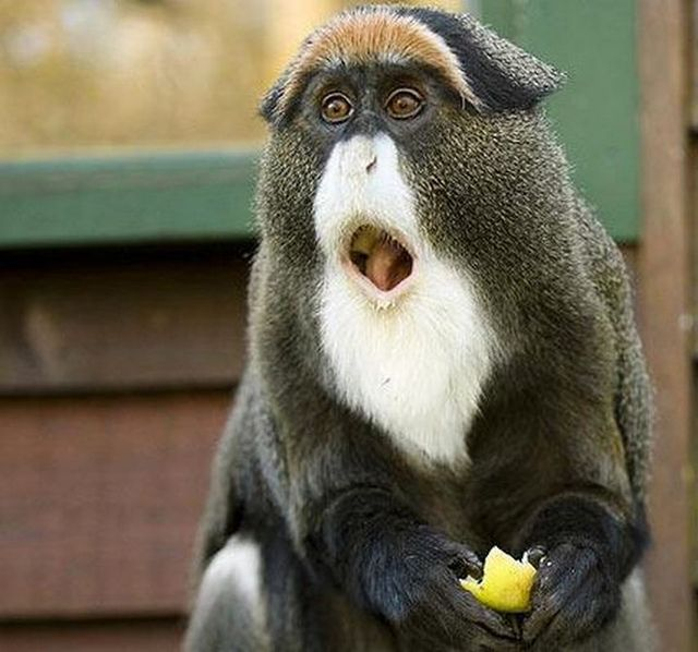 「猿 びっくり」の画像検索結果