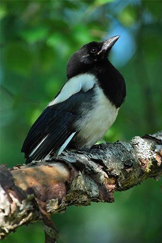 Beautiful Bird Beautiful Birds Pet Birds Animals