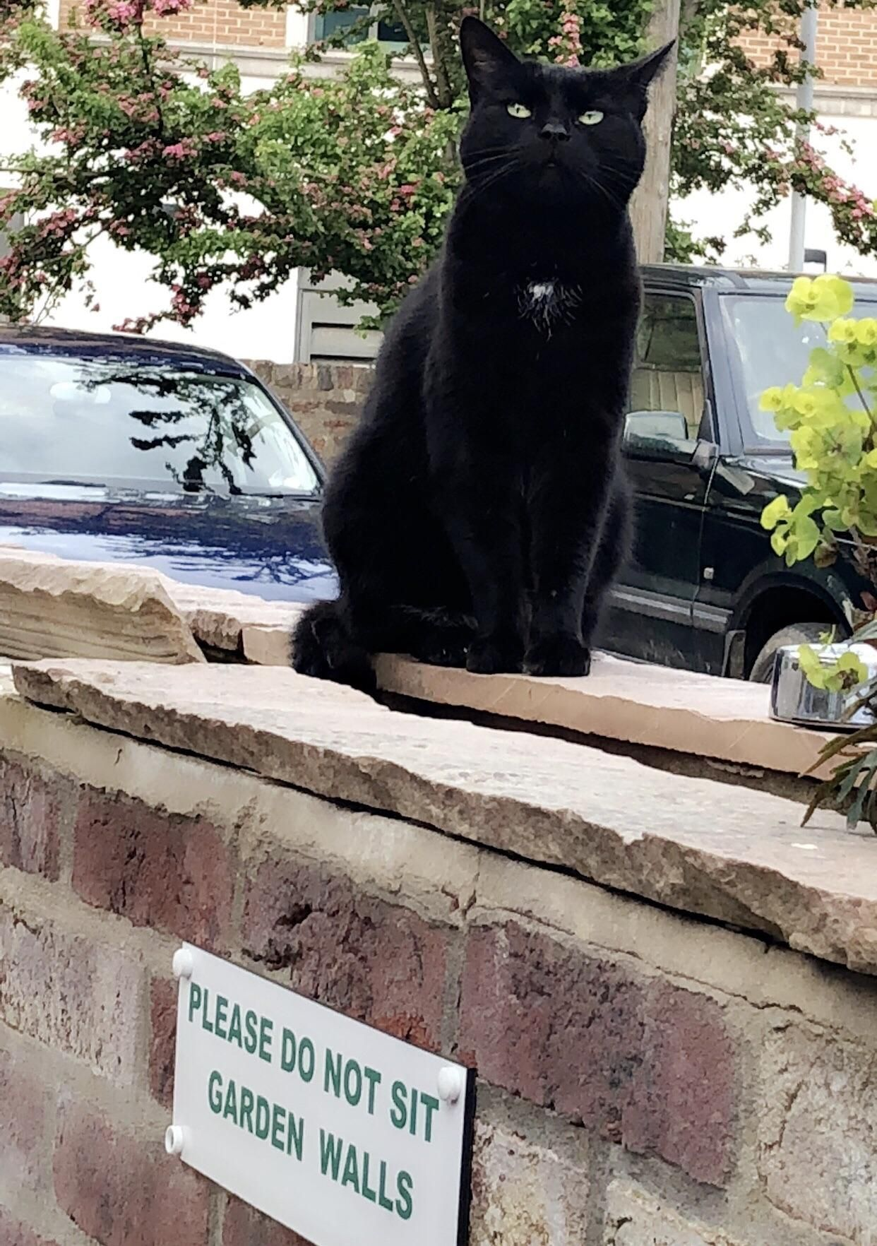 This Is Salem Who Lives In A Beer Garden In York And Sits Patiently For Leftovers Baby Cats Pretty Cats Silly Cats
