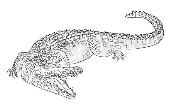 How To Draw Crocodile Step By Step 18 Crockodile Rock