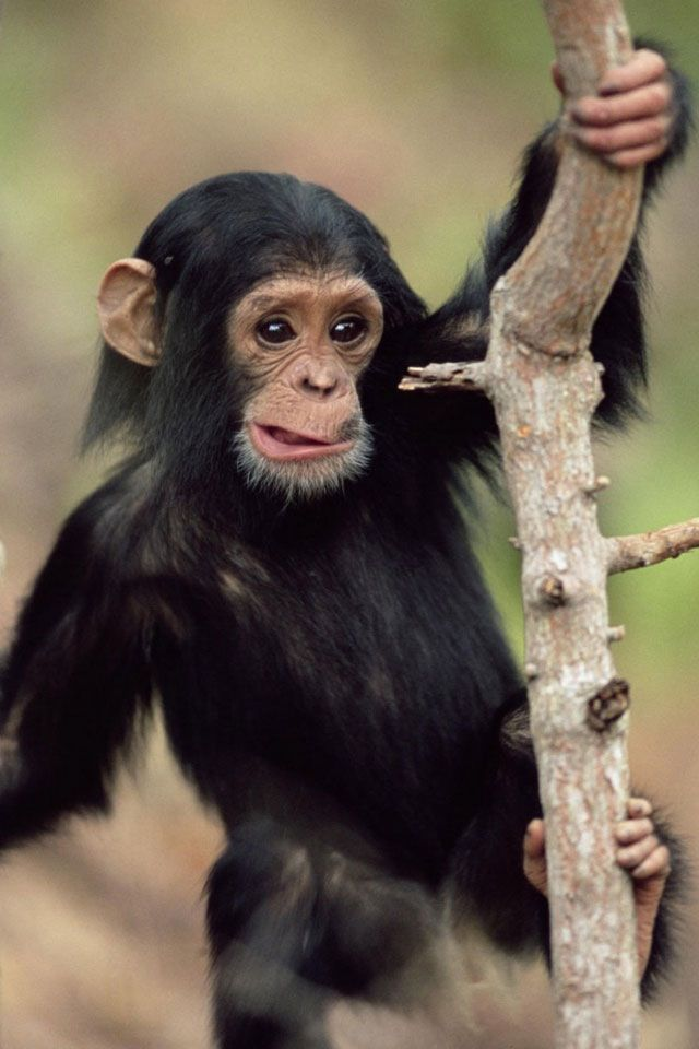 Pin by Delaney Thome on Cute wallpapers | Cute monkey ...