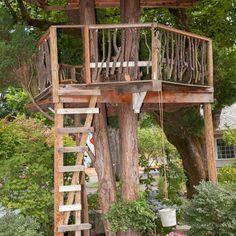 simple backyard tree forts - Google Search | Tree house ...