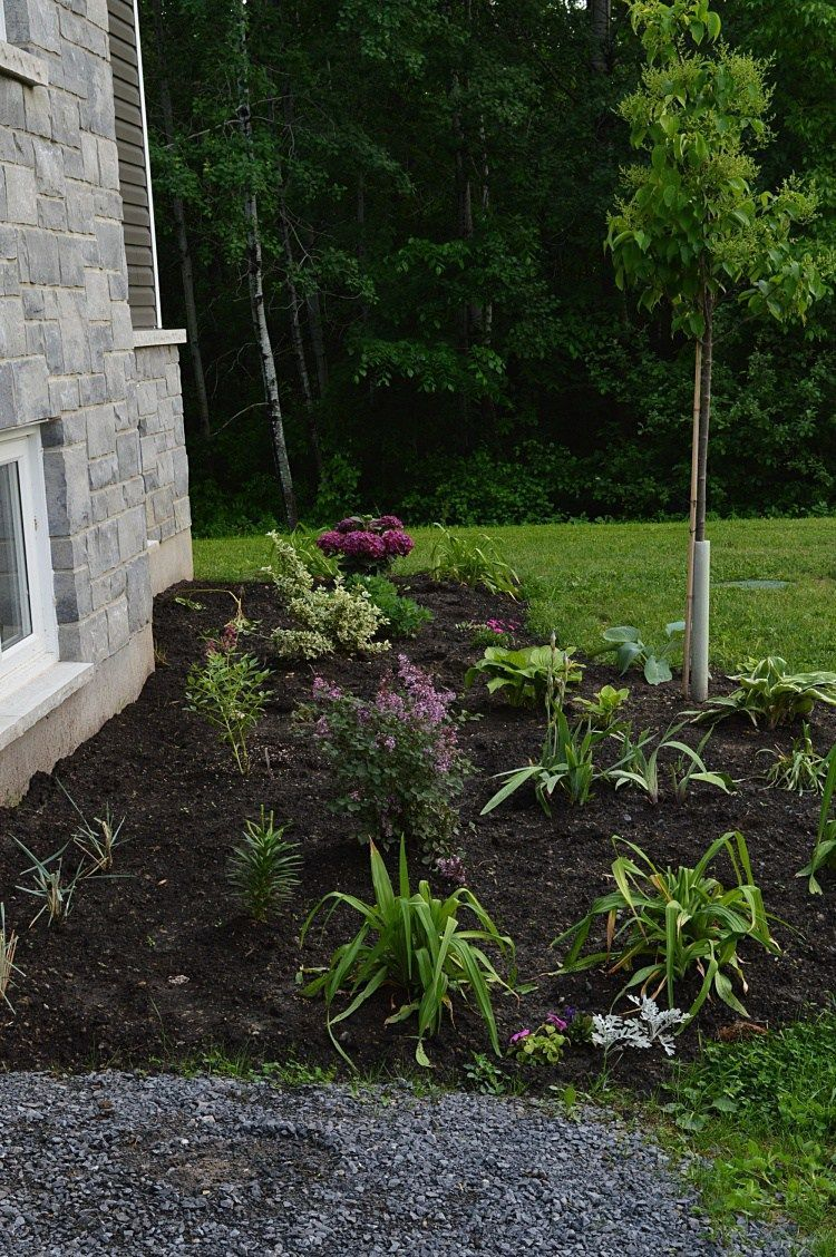 The best tips for designing and planting a low maintenance ...