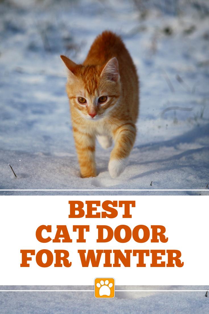 Best Cat Door For Cold Weather Cat Door Cats Cool Cats