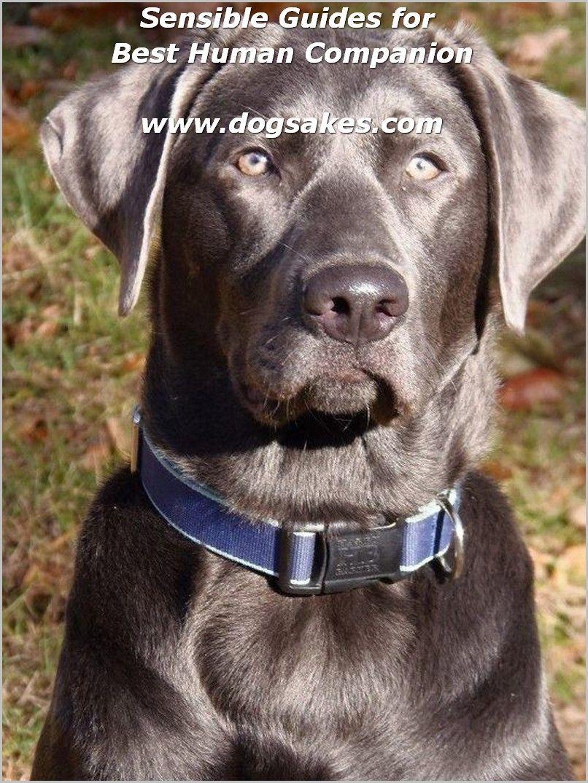Organic Dog Food Prolong Dog S Lifespan More Details Can Be