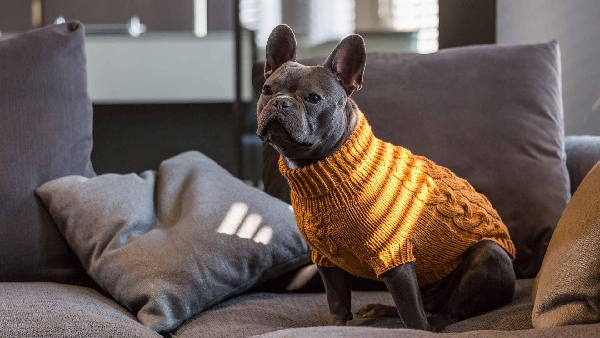 70 Online Kaufen I Dumfort Hundeshop Hunde Pullover