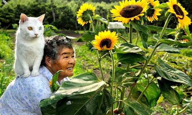 Fotos mostram história de amor entre mulher e gato resgatado das ruas