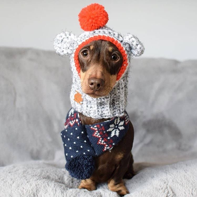 The Sock Monkey Hat Cute Hat Snood For Your Dog Uk Seller Choose Your Size And Colour Chihuahua Pug Yorkie French Bulldog Daschund In 2020 Your Dog Sock Monkey Hat Pugs