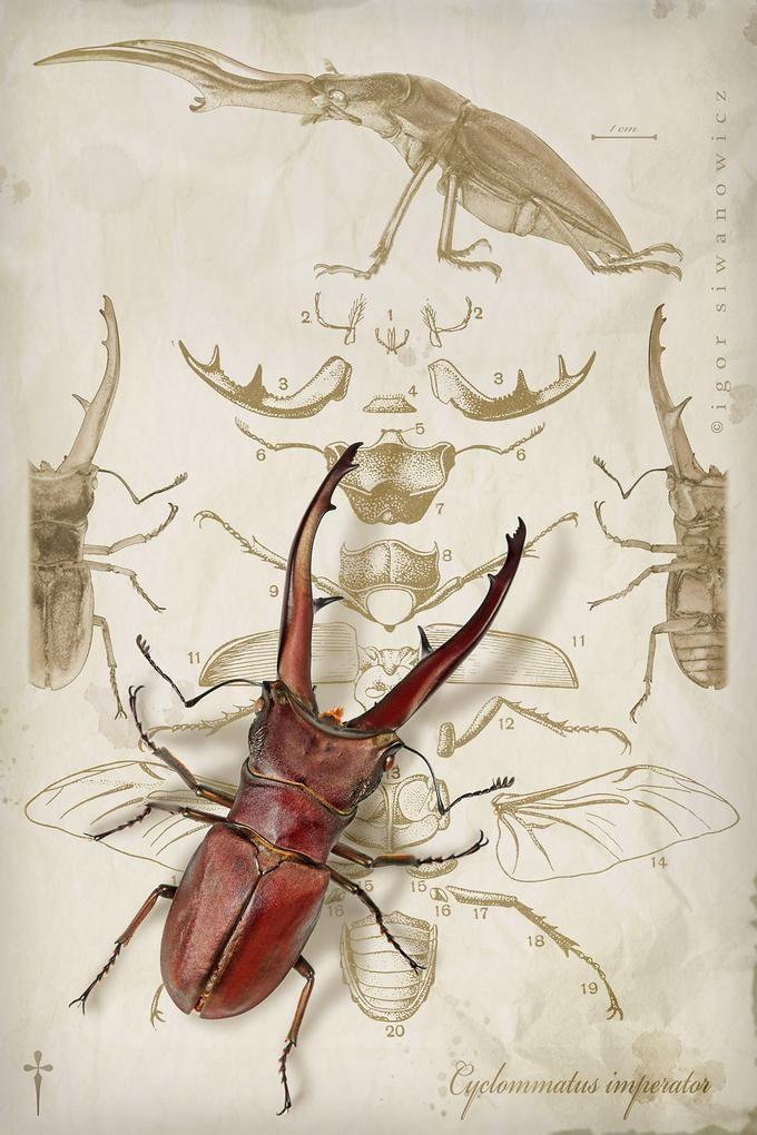 Insectos Escarabajos Acuarela | Invertebrados Ilustración ...