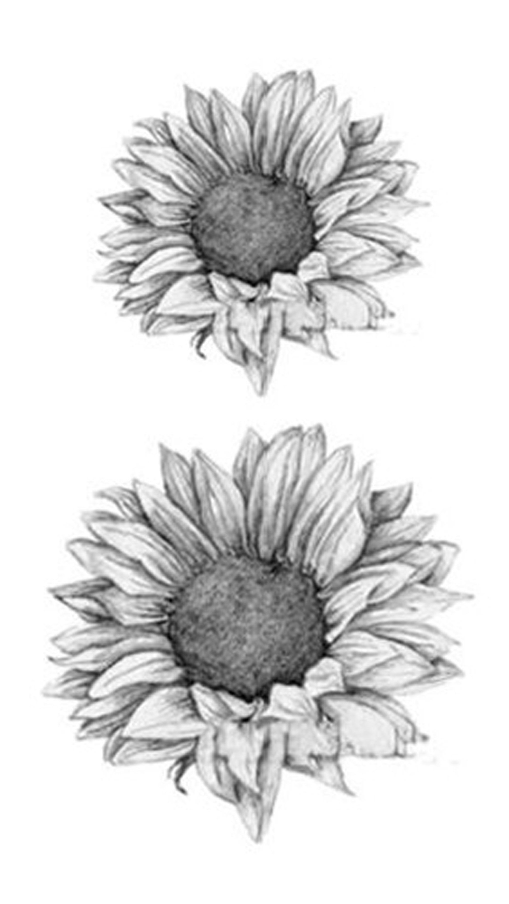 Grace Realistic Black White Sunflower Temporary Tattoo Sunflower Tattoo Thigh White Sunflowers Sunflower Tattoo Shoulder