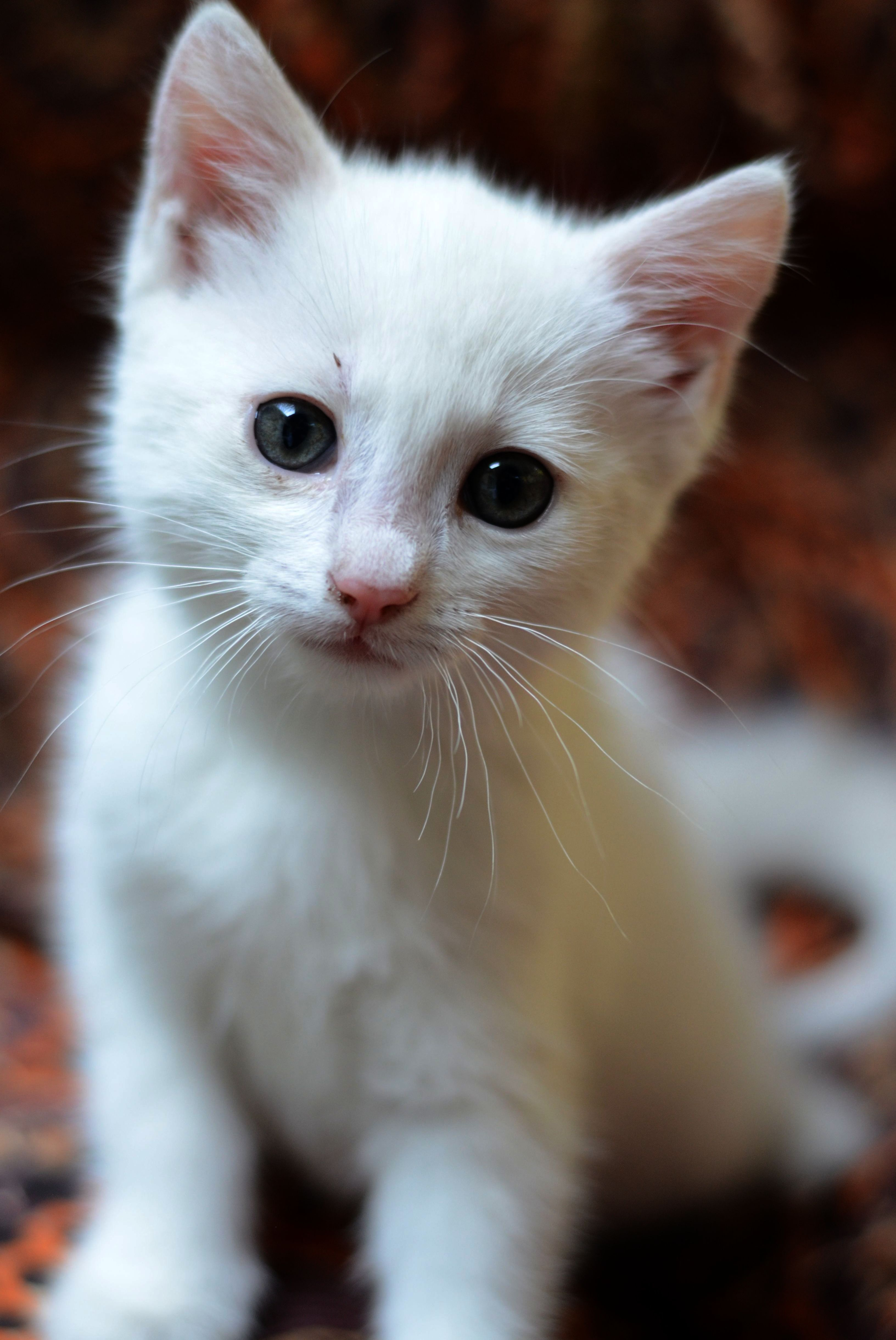 white cat ) Cats and kittens