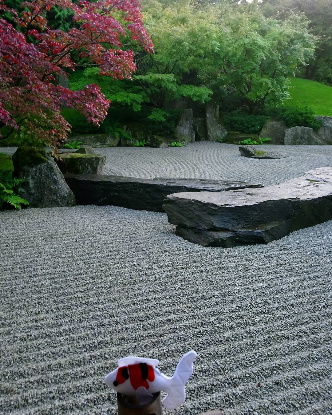 Kimini Im Steinmeier Japanischergarten Gartenderwelt Kimkoi Weltenbummler Berlin Zwischendenshows Japanischer Garten Garten Japan
