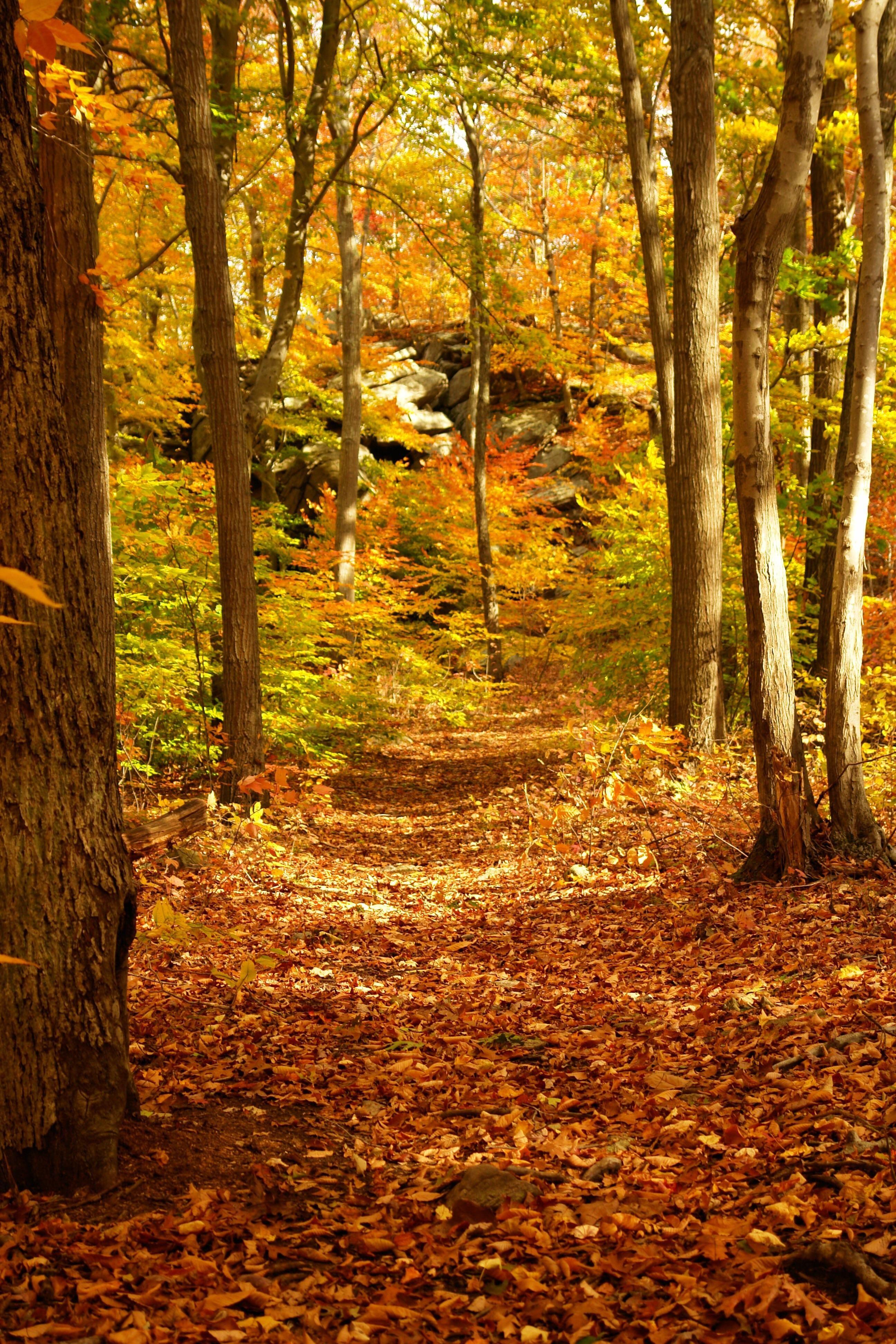 Fall in Connecticut [OC] [3888x2592] rickyricardo808 http://ift.tt/2yEb3rg October 21 2017 at 12:02AMon reddit.com/r/ EarthPorn
