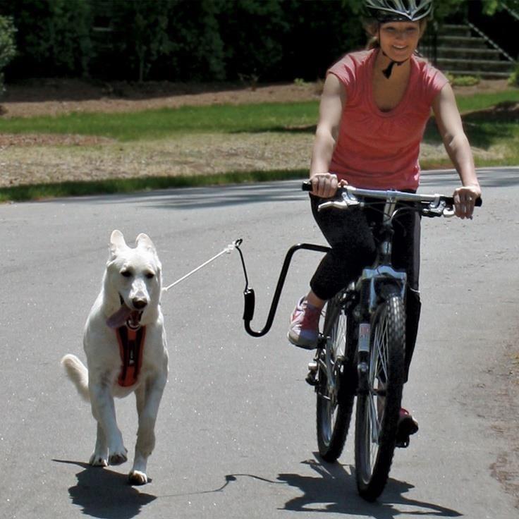 ¿Cómo evitar que las visitas al veterinario sean una pesadilla para tu mascota? Antes de visitarnos, te recomendamos darle un paseo largo así tendrá menos energía para ponerse nervioso. #TipVital #EntendiendoMiMascota